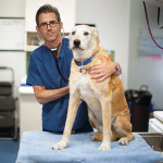 07/26/2012 - New York, New York - Dr. Andrew Kaplan, V90, poses for a portrait at City Veterinary Care in New York City on July 26, 2012. (Robert Caplin for Tufts University) (Note: Dogs belong to subject. No releases required)